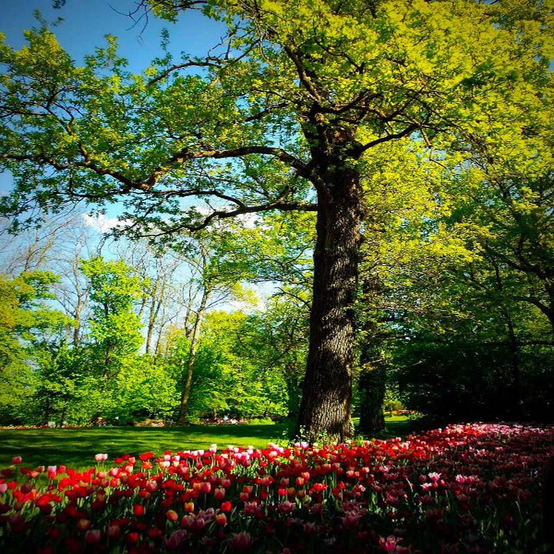 Turin et Fête des Tulipes à...