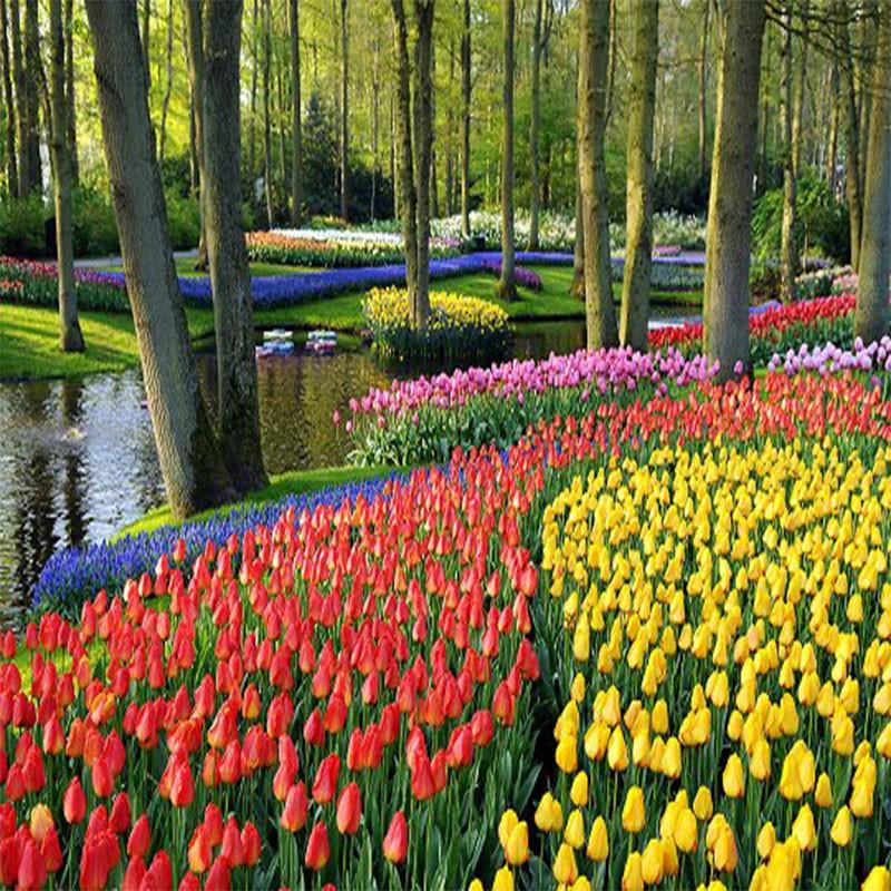 Croisière des Tulipes en...